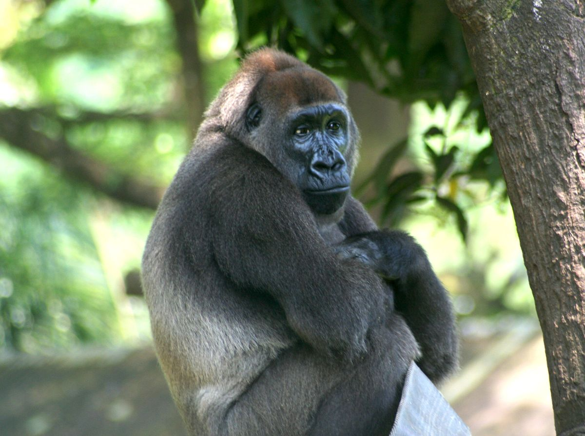 Tofala Hill Wildlife Sanctuary: The Cross River Gorillas New Protected Reserve