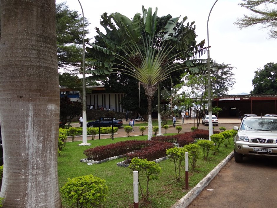 The University of Yaoundé I